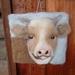 Wool cow art - NZ wool  - nice gift - needle felted