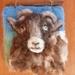 New Zealand  Ram  -  sheeps wool - wool art piece  - Natural gift  - needle felted