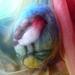 Large wool Toadstool  egg - Birds  - New Zealand wool
