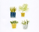 Set of 4 stickers - House Plants