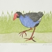 Pukeko print by Allan Gale