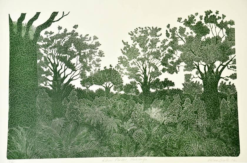 Kauri Forest, Hokianga print by Allan Gale