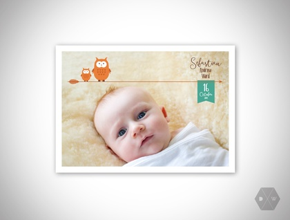 Baby Announcement & Thank You Postcards - Woodlands Owls - Set of 50 Postcards