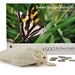 Forest Ringlet Butterfly 500 XL Piece Jigsaw Puzzle