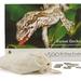 Forest Gecko 500 XL Piece Jigsaw Puzzle