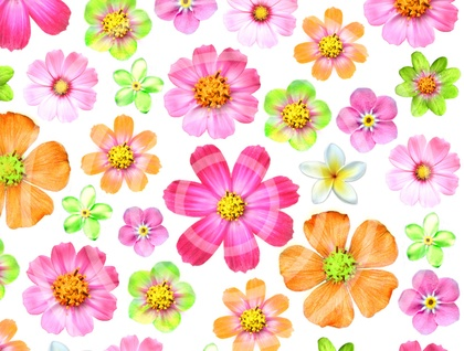 Edible Wafer Paper blossoms