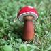 Mushroom Gnomes x 3