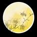 Manuka Circle - Digital Art Download