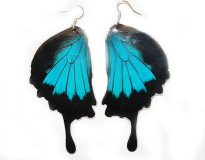 The Insect Shop- Blue Mountain Swallowtail - Butterfly Wing Earrings