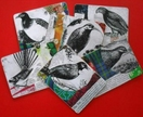 Placemats - NZ Birds