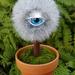 Eye Plant