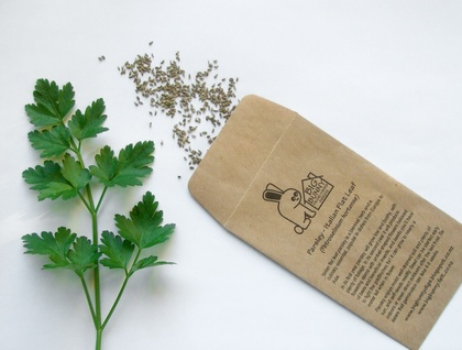 Big Bunny's Italian Flat Leaf Parsley (Herb)
