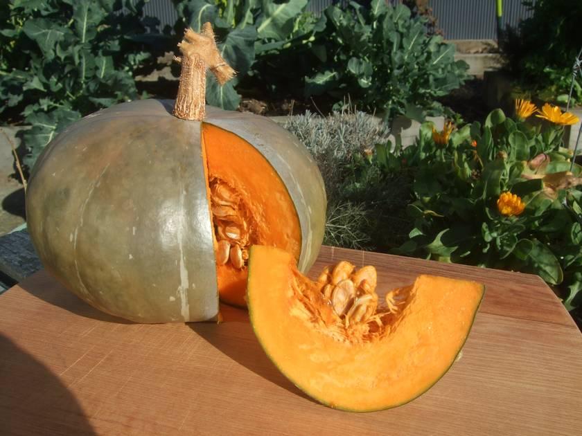 Big Bunny's Buttercup Pumpkin
