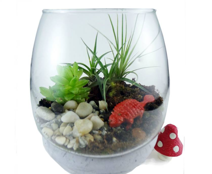 air plant fern moss succulent terrarium kit felt. Black Bedroom Furniture Sets. Home Design Ideas