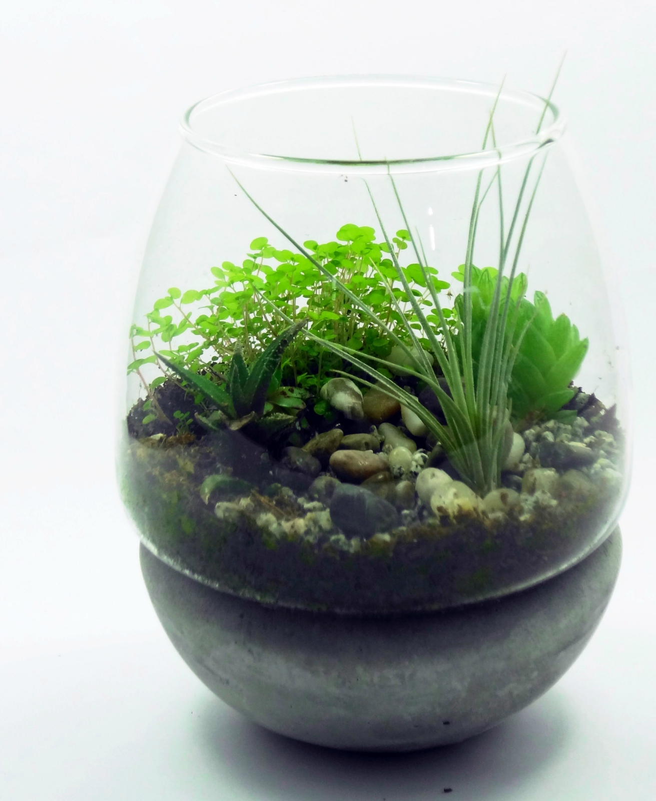 ecobubbles air plant succulent terrarium kit felt. Black Bedroom Furniture Sets. Home Design Ideas