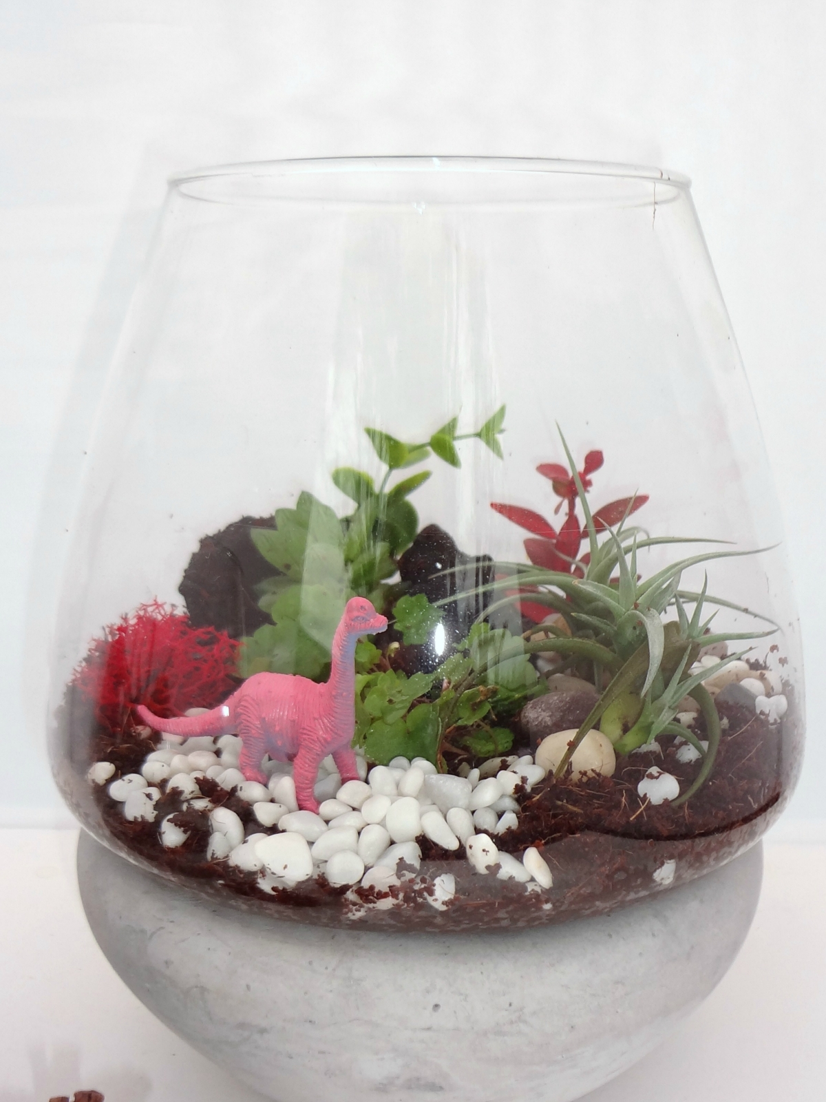 Air Plant Fern Moss Succulent Terrarium Kit Felt