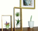 Air Plant Frame & Air Plant Double