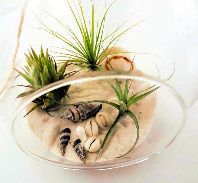 Beachside Air Plant Terrarium Kit Large Felt