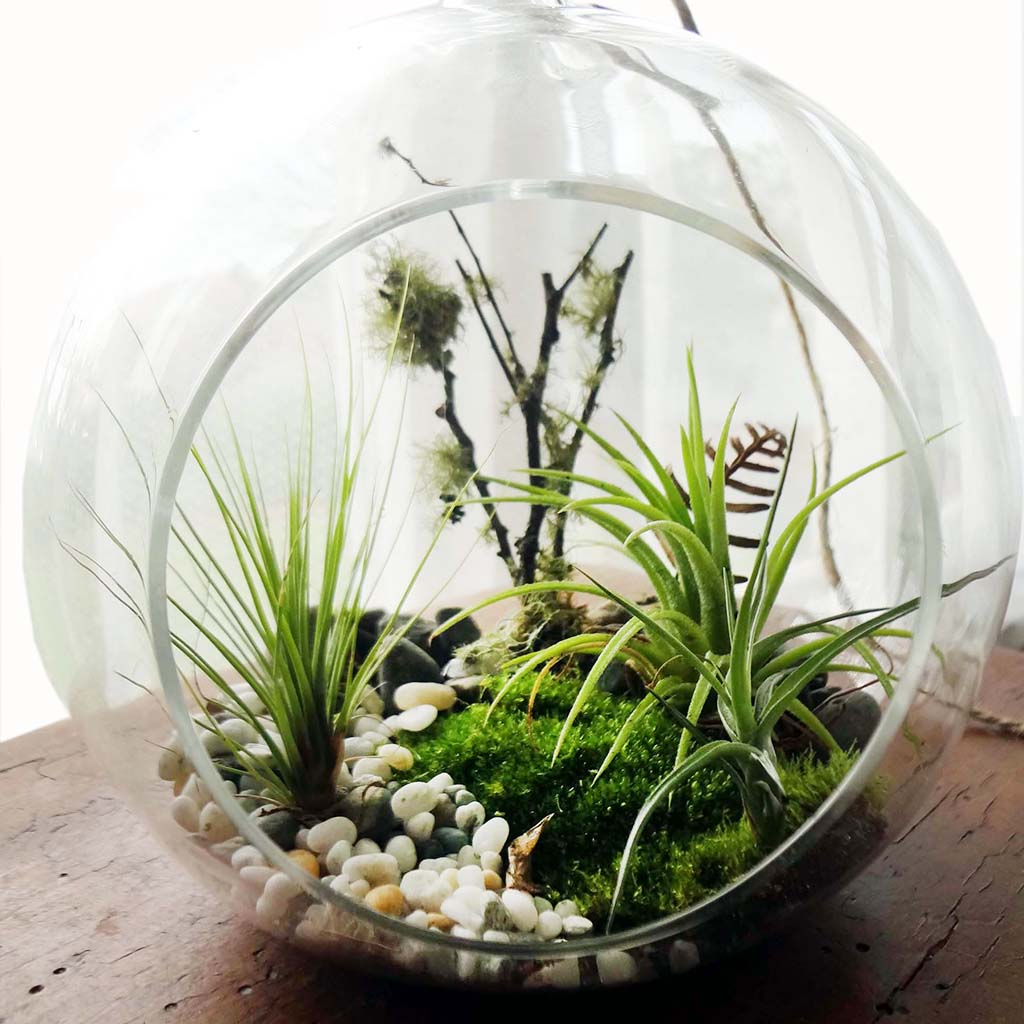 woodlands air plant terrarium kit large felt. Black Bedroom Furniture Sets. Home Design Ideas