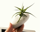 Pebblepot & Air Plant