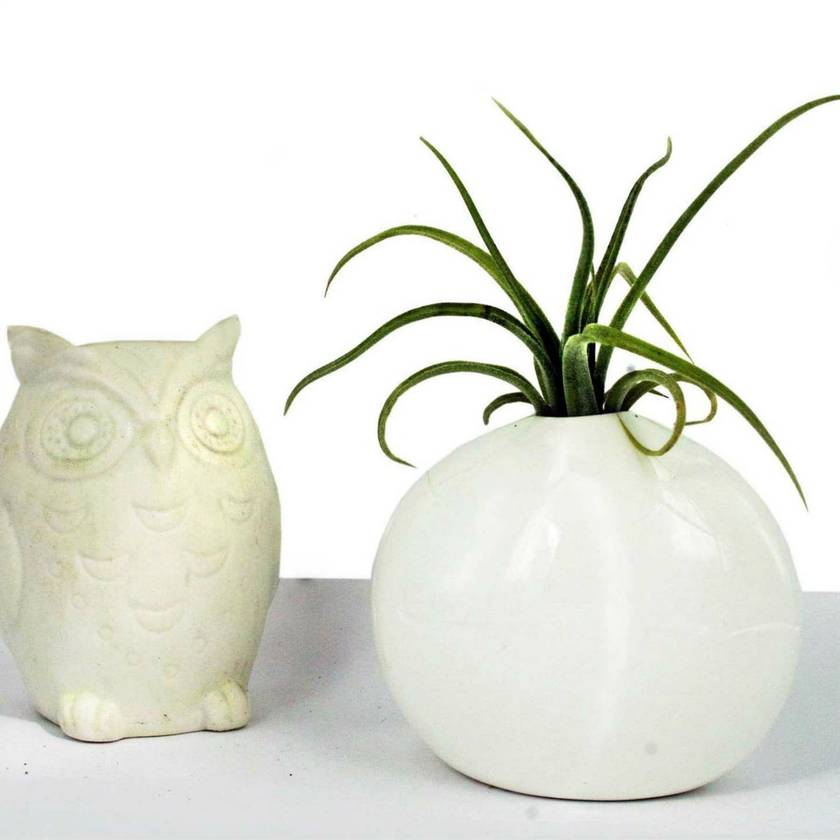 Pinch Pot & Air Plant