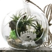 Woodlands Air Plant Terrarium Kit
