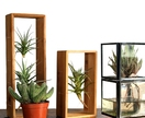 Air Plant Frame & Air Plants - Double