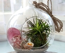 Summer Air Plant Terrarium, Large