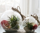 Summer Air Plant Terrarium - Small