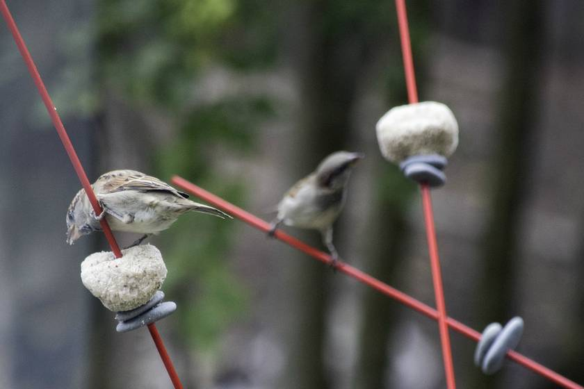 Windsticks - Kinetic Wind Sculpture and Bird Feeder