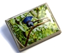 Tui in a tree Brooch