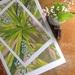 Ti Kouka (Cabbage Tree) A4 Giclee Print