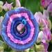 Handknit: Sweet Pea Circle Shawl (Eclectic Rapt range)
