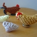 Chook Family