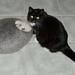 Ready made Cat Cave in Natural grey colour Small size by FeltSoapGood