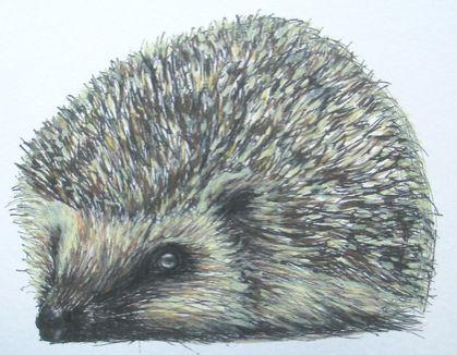 Hedgy the Hedgehog