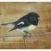 NZ Tomtit Bird