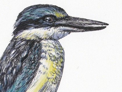 Kingfisher Ink Pen and Watercolour Print