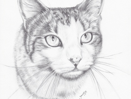 Pet or Person Pencil Portraits