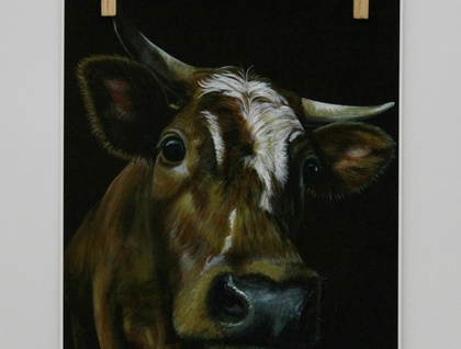 Curious Brown Cow
