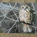 New Zealand Morepork-Ruru Gift Card