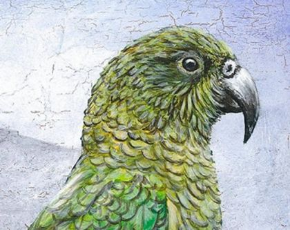 Original Painting of a New Zealand Kea