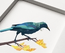 Tui, New Zealand bird, Geometric bird print, Original illustration