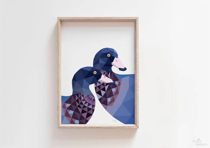 New Zealand Whio / Blue Duck Art Print
