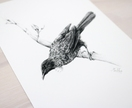 NZ Tui print A4 - Contemporary art print of a pencil drawing