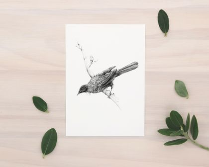 NZ Tui print A5 - Contemporary art print of a pencil drawing