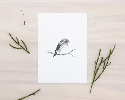 Toutouwai, NZ Robin print A5 - Contemporary art print of a pencil drawing