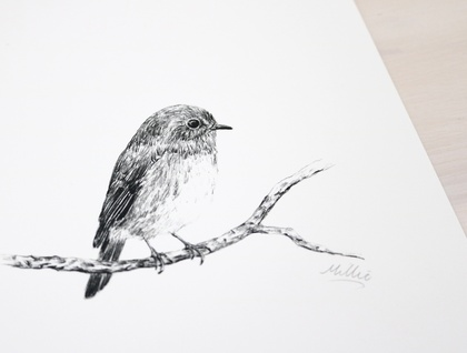 Piwakawaka, Tui, Toutouwai Native bird A5 prints