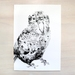 Kakapo print A4 - Contemporary art print of Ink and wash drawing.