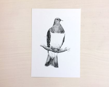 NZ Kereru print A4 - Contemporary art print of a pencil drawing